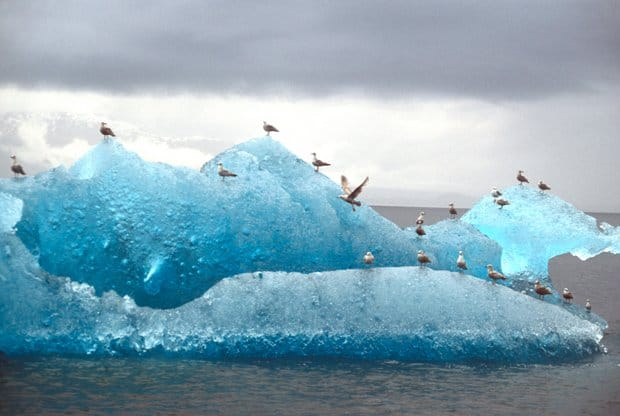 Floating large blue iceberg with several seabirds perched on it.