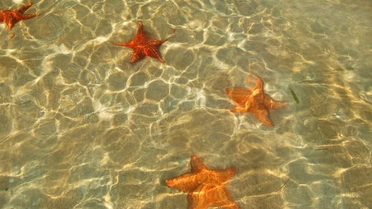 Orange star fish are in the sand under glimmering, clear water near Bocas Inn, a family hotel in Panama