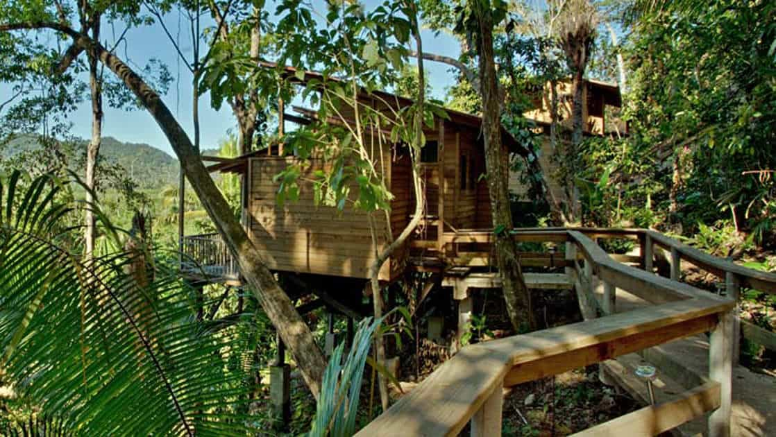Caves Branch Jungle Lodge perched in the canopy with epic jungle views in Belize