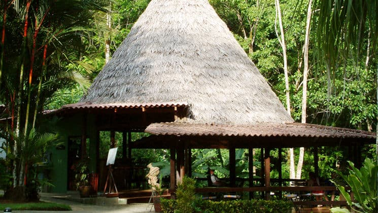 Forest bar at Casa Corcovado
