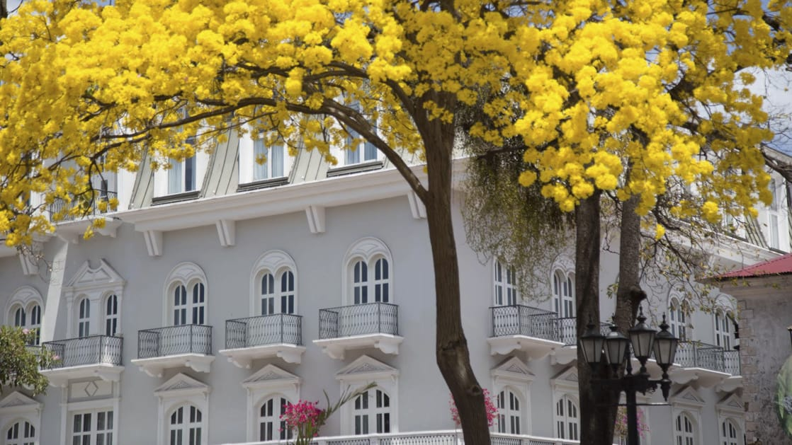 Bright yellow trees and pink flowers around the exterior of Central Hotel Panama in Panama City