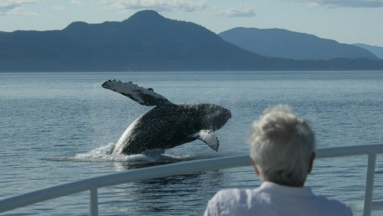 Guest watches whale breach from deck of Sikumi yacht in Alaska