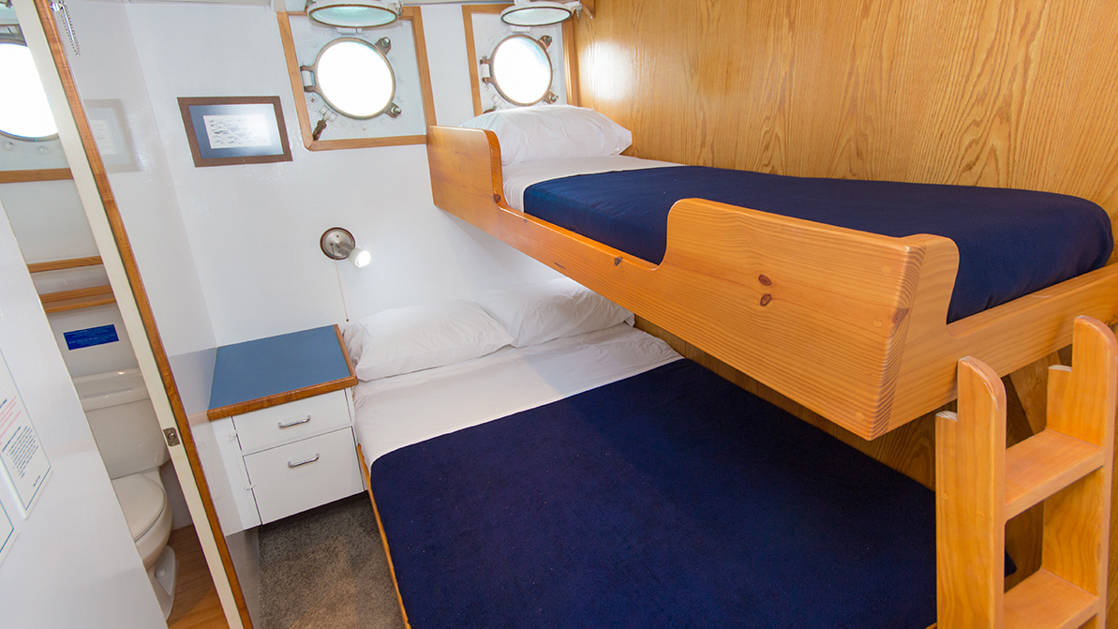 Cabins 3, 4, & 7 aboard Cachalote Explorer with bunk beds and porthole.