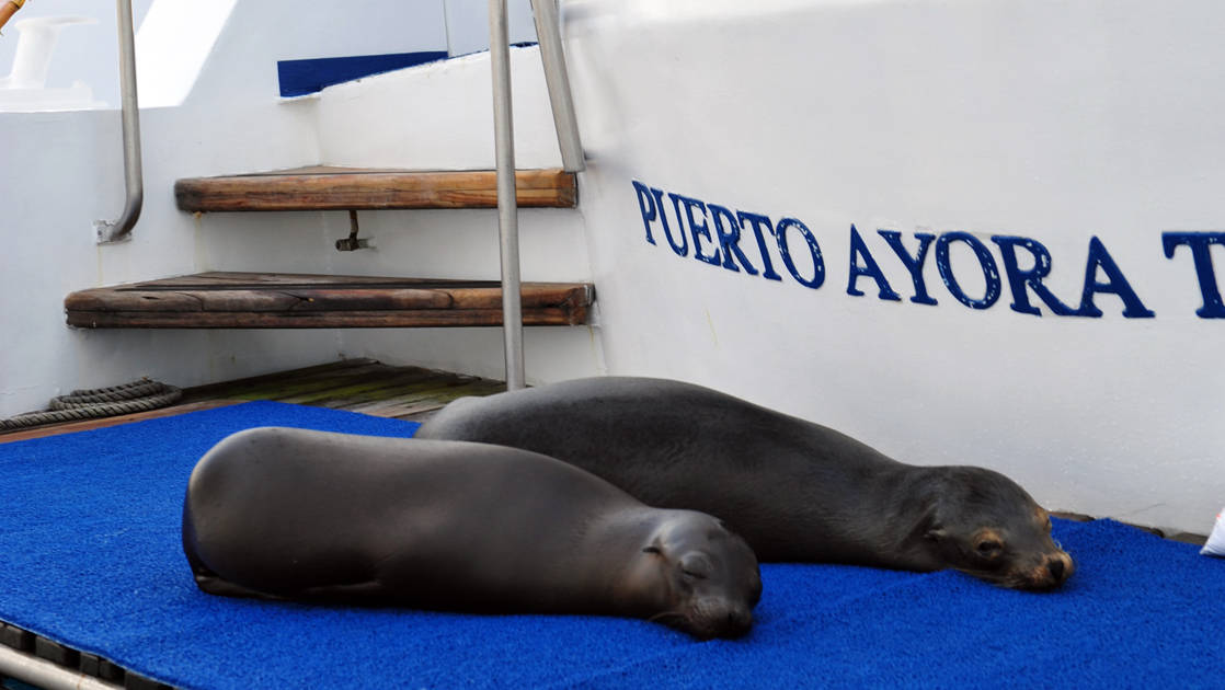 Sea lions sleeping on the deck of the Coral I & Coral II yachts in the Galapagos Islands