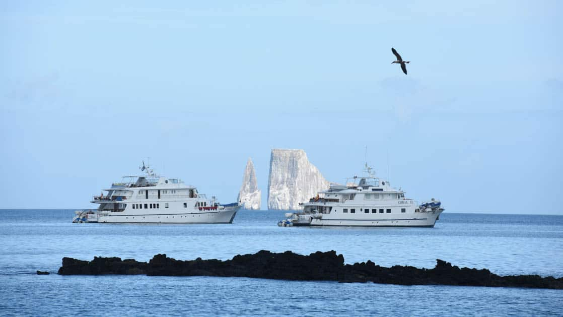 Bird flying above Coral I & Coral II yachts, shown from starboard side in Galapagos Islands