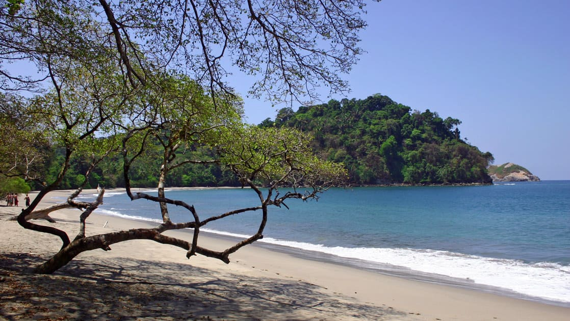 desolate panama beach with a tree hanging over the sand, blue water and jungle behind it