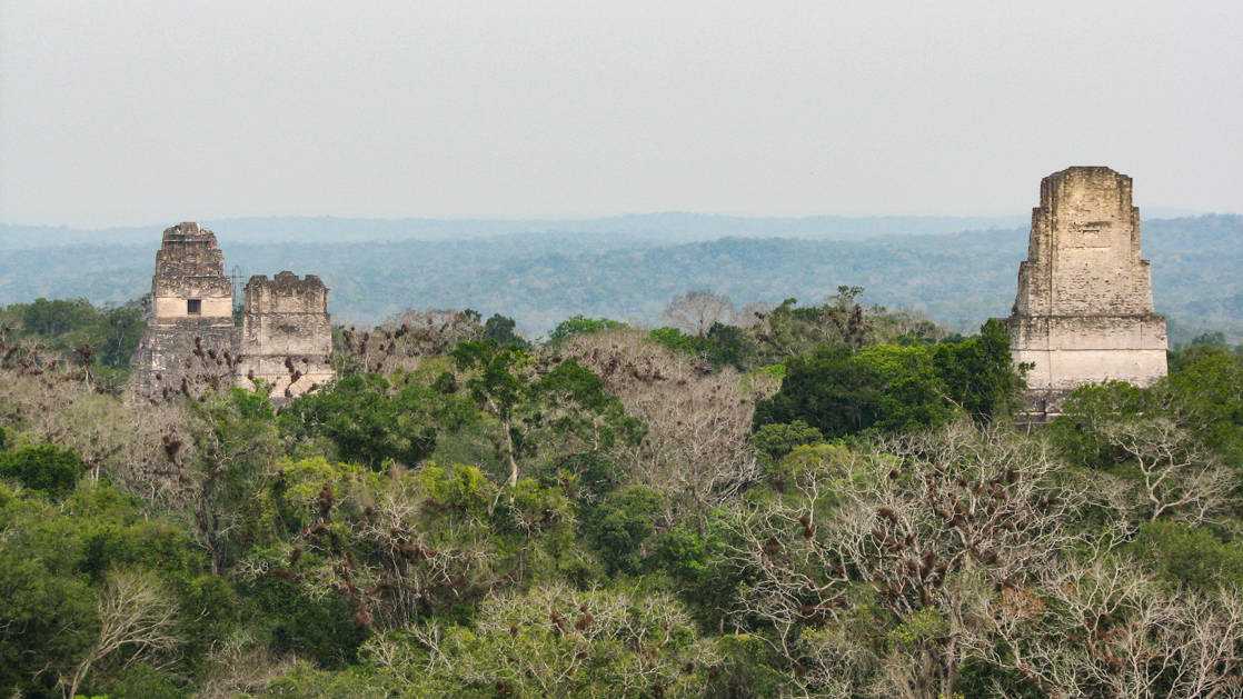 Tikal ruins and pyramids sticking out above the treeline in Guatemala.