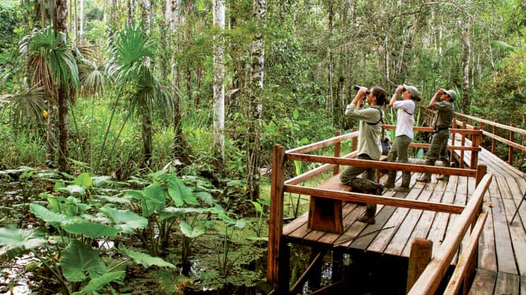 Several guests stand on a walkway leading through the Amazon rainforest and look at wildlife through binoculars, at the Inkaterra Reserva Amazonica, an eco-luxury hotel in Peru
