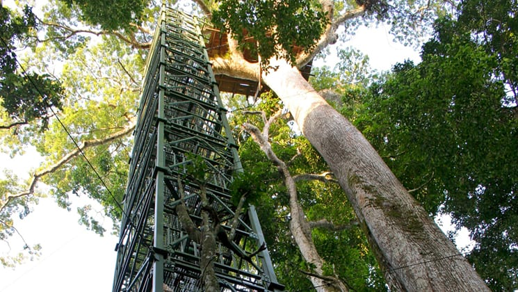 A tall structure with platforms and stairs allows guests to view birds, plants, and animals near the Napo Wildlife Center, a sustainable eco lodge surrounded by a 53,000 acre rainforest biosphere reserve within Yasuni National Park in the Amazon.