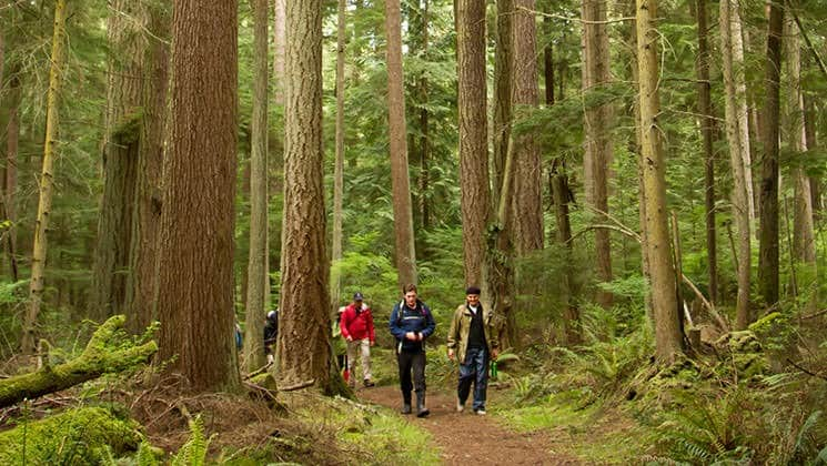 group of adventure travelers walking through the forest in the pacific northwest at one of the land tours on one of the stops of the Olympic Wilderness & San Juan Islands small ship cruise