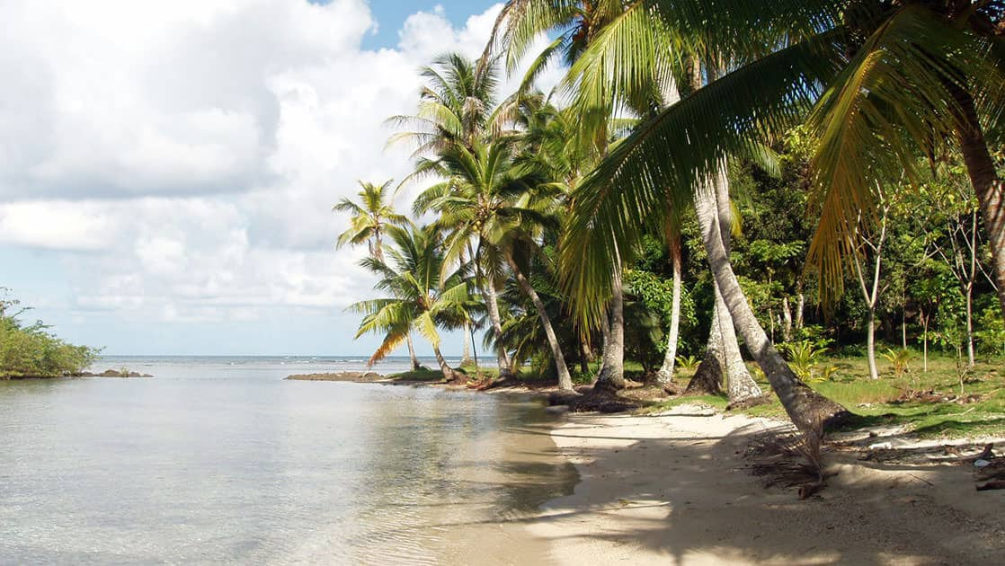 a quiet beach with palm trees overhanging the white sand and calm ocean accessed via small ship on the Panama Adventure Cruise