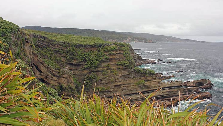 an overcast day in new zealand with sheer green cliffs running down the coast and grassy plants in the foreground