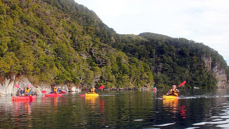 group of adventure travelers in red and yellow kayaks traveling on calm water down the milford sound in new zealand with lush green mountains behind them