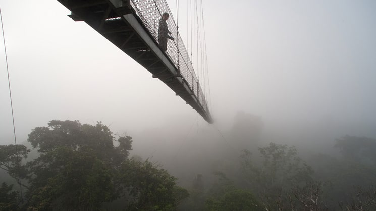 Sacha Lodge's raised tree walk disappears into the clouds hanging low in the Ecuadorian Amazon.