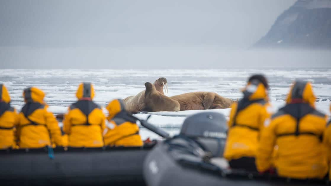 people in yellow jackets sit in inflatable rafts to view a group of walruses laying on sea ice beyond them on a cloudy day in the arctic