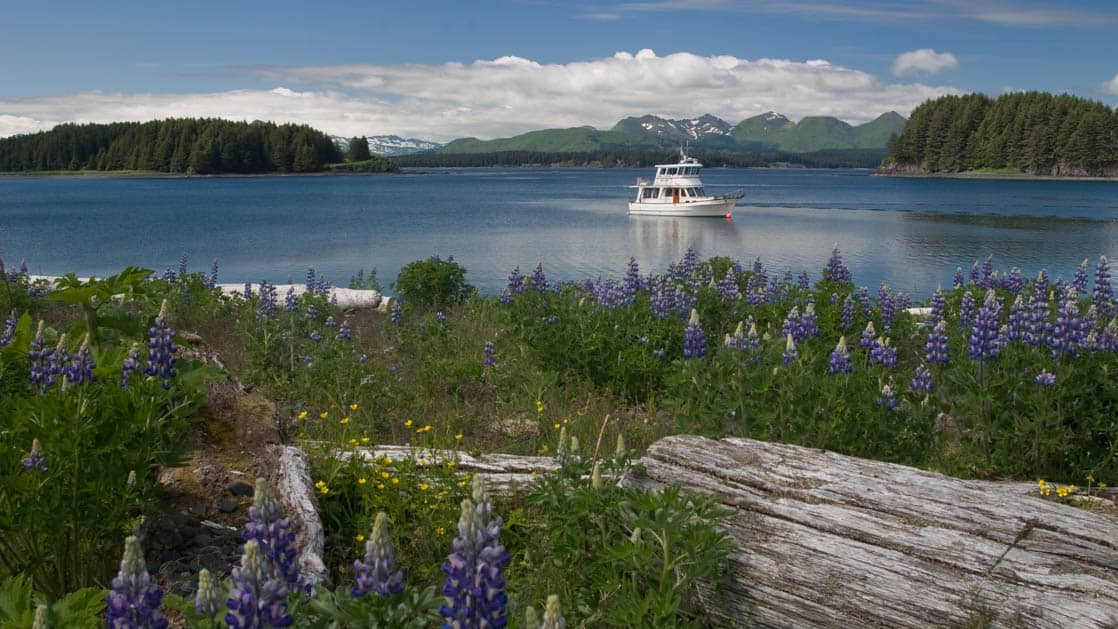 Kodiak day cruise on the Sea Breeze boat as seen from shore in Alaska