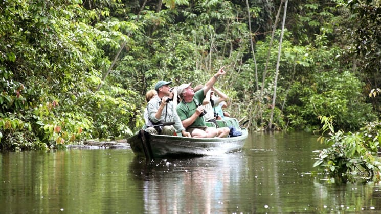 canoe with tourists going through the jungle in the river in brazil