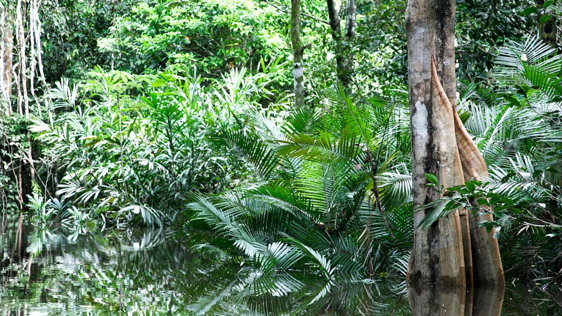 lush jungle trees right up to the water on the rio negro in brazil