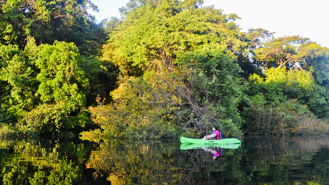 Kayak close to the jungle trees on the side of the calm river and reflecting on the water