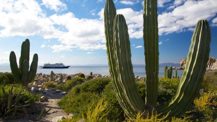 Cacti on shore with Baja's Bounty small cruise ship in distance