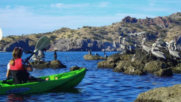 Kayaker approaching rocks covered in pelicans on baja's bounty small ship cruise