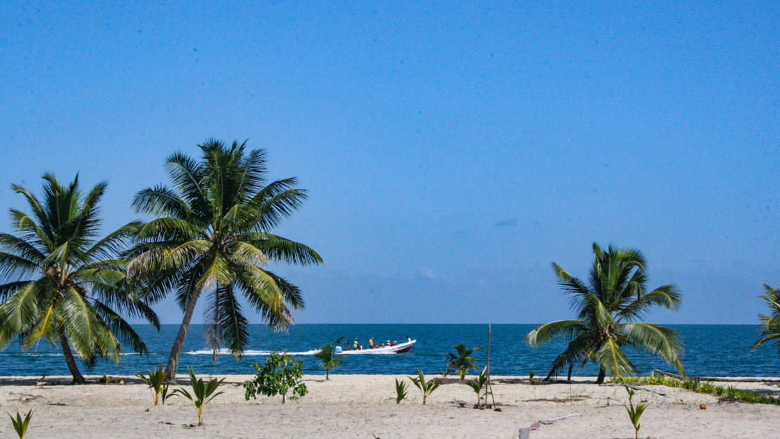 A white sand beach with palm trees and a dark blue sky and sea in Belize.