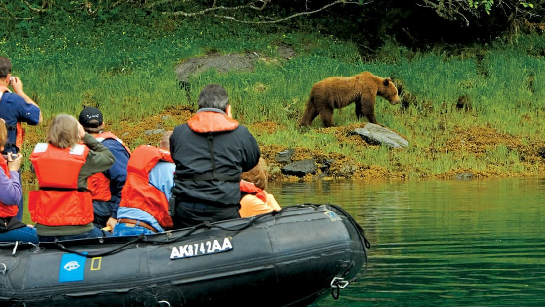 Skiff of passengers taking pictures of a brown bear close to the water at Baranof Island