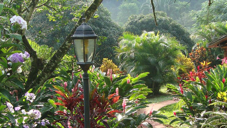 garden area of the candelaria lodge in guatemala filled with lush plants and a lightpost sticking out of it