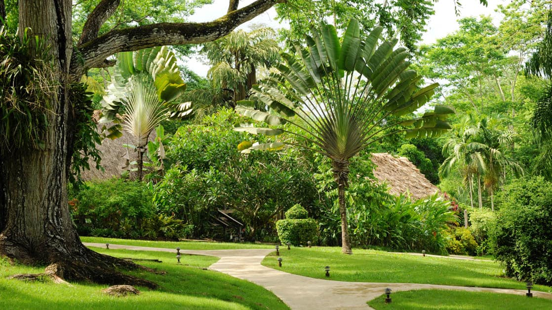 Native trees and plants from the Belize rainforest among quiet walking paths at Chaa Creek Jungle Lodge