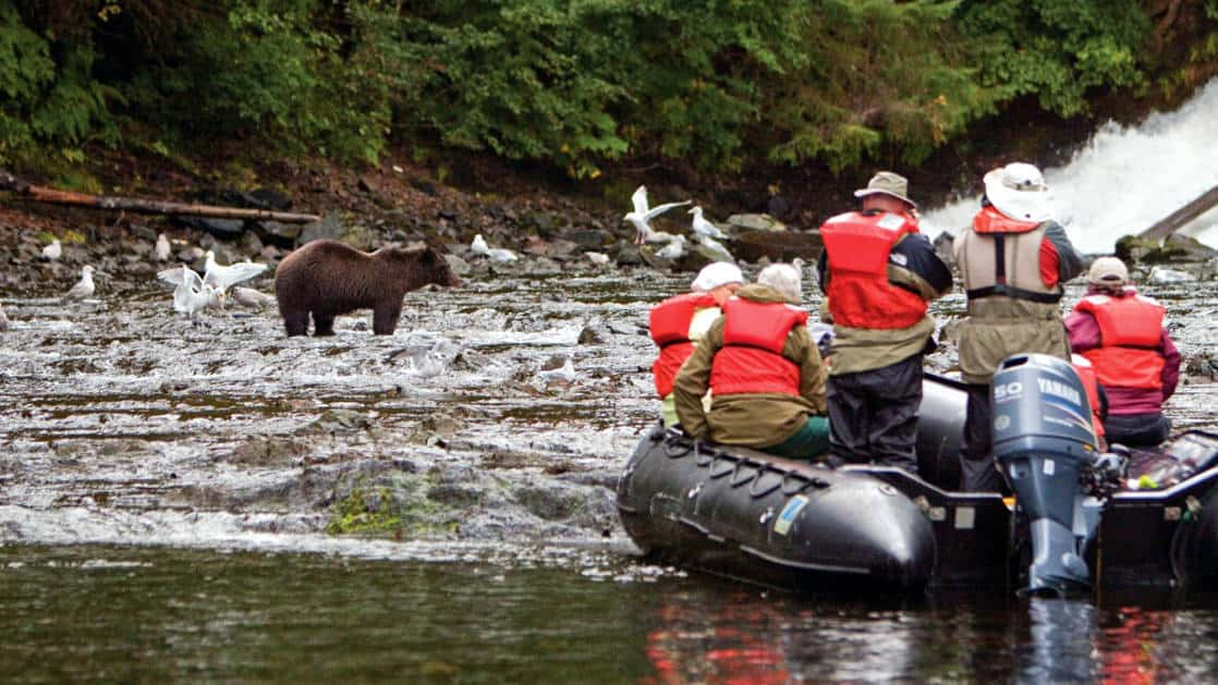 Brown Bear being watched by boat at Pavlof Harbor on Chichagof Island in Southeast Alaska.