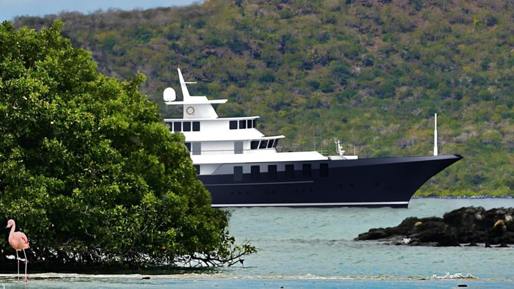 A rendering of a new Galapagos small ship, Conservation, emerging from behind a bush with a pink flamingo in the foreground