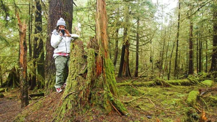 Passenger from a small ship cruise hiking in Haida Gwaii and taking a picture of a moss covered tree stump