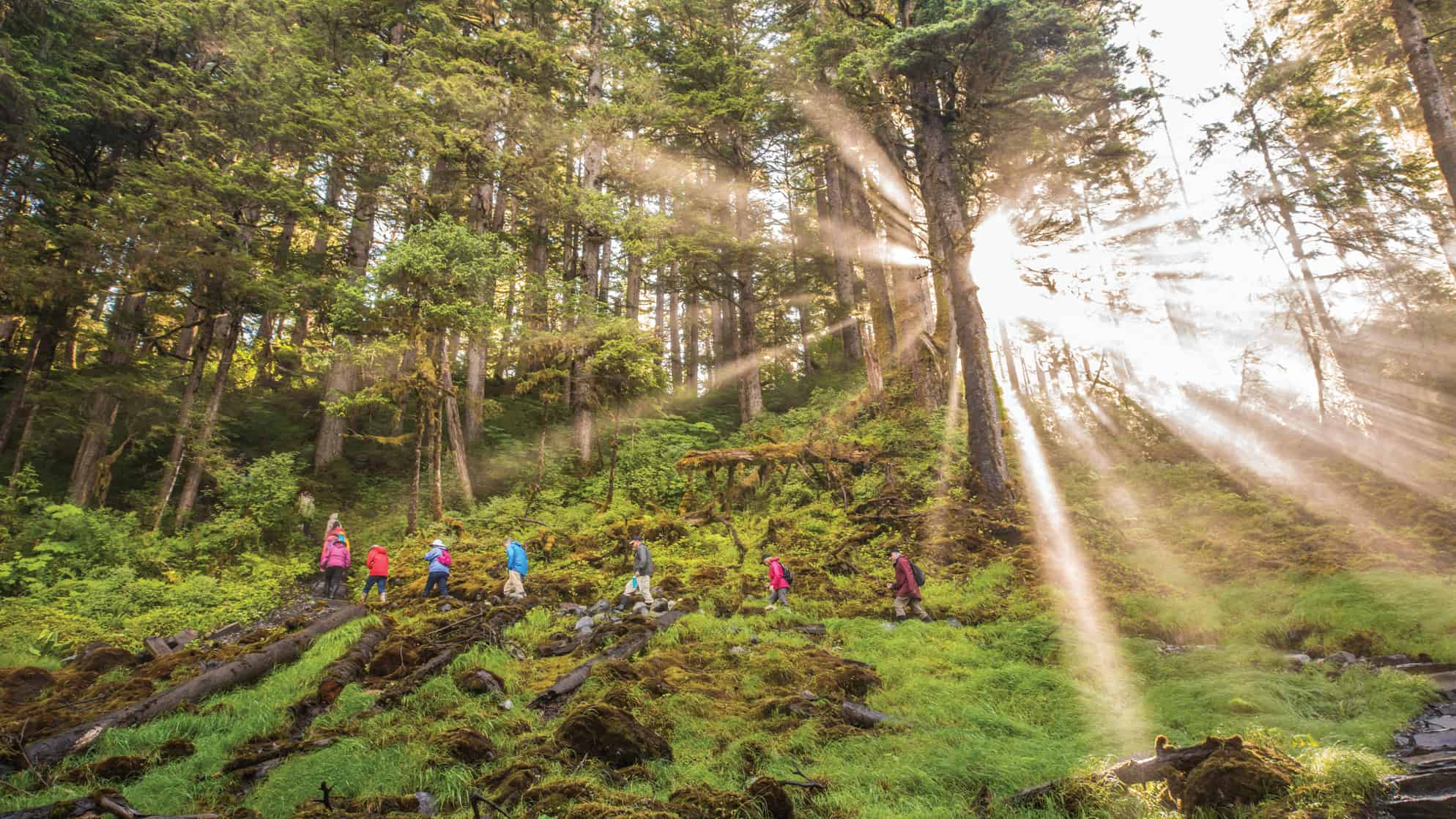 Group of small ship cruise passengers hiking Cascade Creek Trail, Thomas Bay in the Tongass National Forest of Alaska