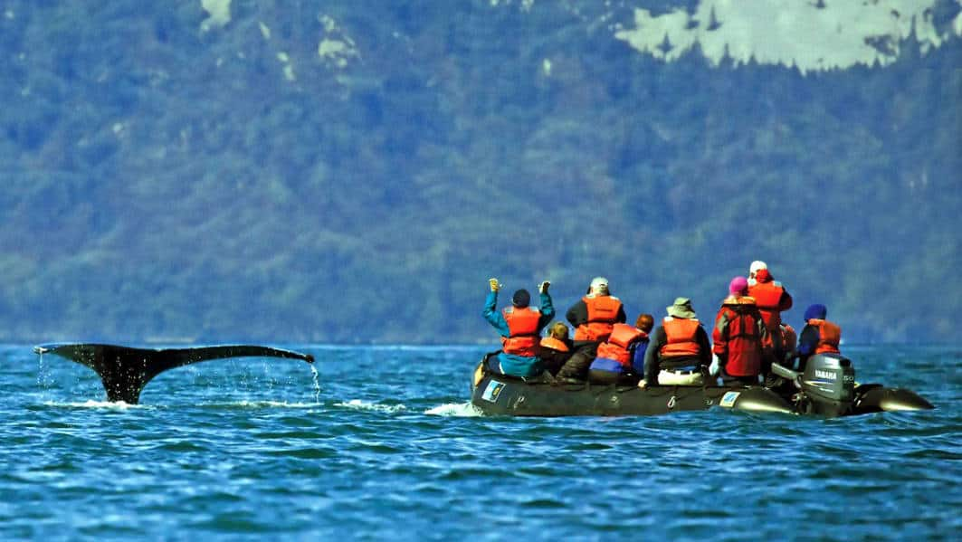 Guests on Zodaic observing a diving Humpback Whale in Alaska
