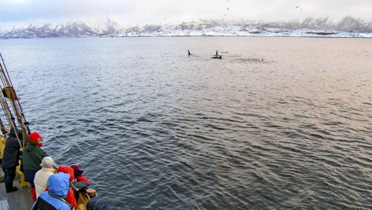 Whale watchers at ship rail watch orcas in arctic waters