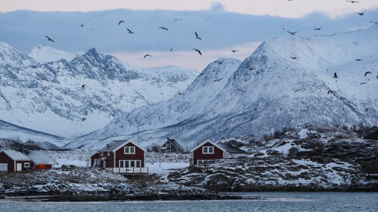 coastal houses, seabirds, mountains on north norway aurora borealis whales arctic cruise