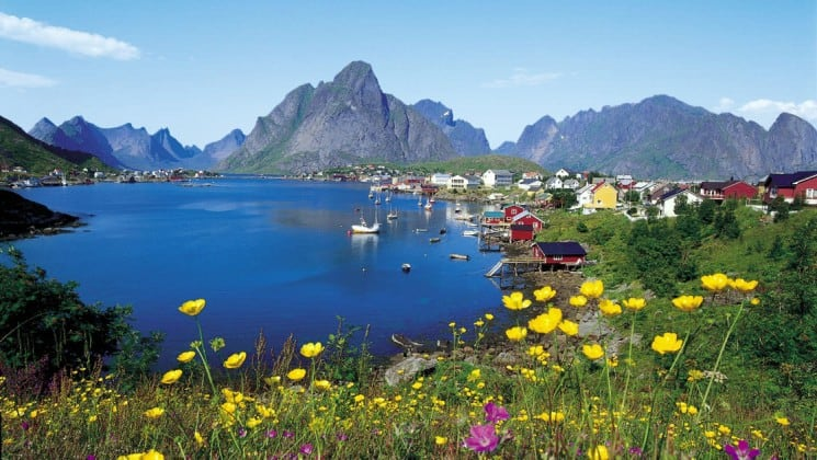 mountain flowers blooming near coastal town on norway's fjords & arctic svalbard cruise