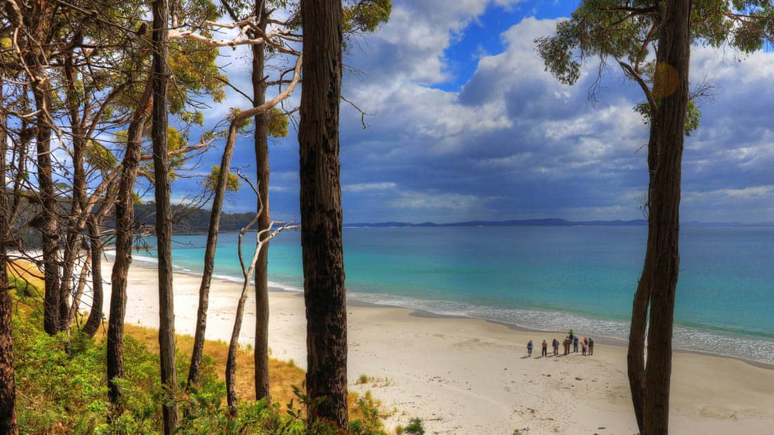 travelers walk on a pristine white australia beach with a turquoise ocean with skinny trees in the foreground and clouds in the distance