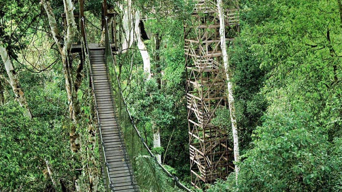 Walkways and structures built in the jungle at the Inkaterra Reserva Amazonica, an eco-luxury lodge in the heart of the Peruvian Amazon Rainforest, adjacent to the Tambopata National Park.
