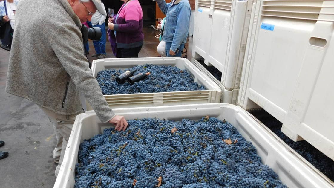 a man in a hat touches pacific northwest wine grapes in a large carton, while another carton is behind him and has two bottles on top of its grapes