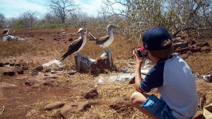 Young boy photographing two boobies in galapagos islands