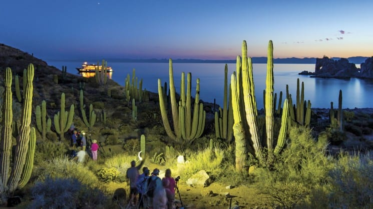 Photographers light cacti for shot as sun sets on sea of cortez