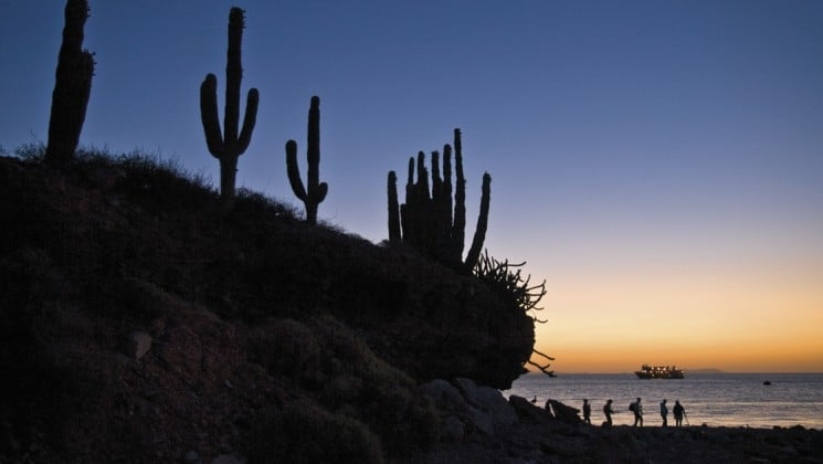 Cacti on cliff at sunset with serenity & sea life small ship cruise in baja