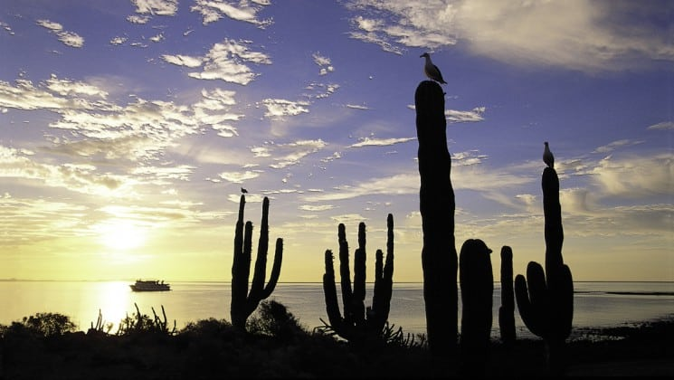Birds perched on cacti with small cruise ship in distance