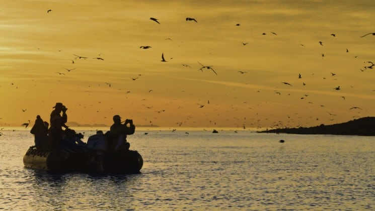 people on zodiac photograph sea birds at sunset on pacific coast cruise to baja
