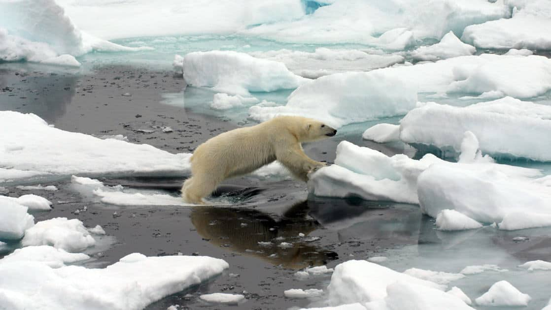polar bear jumping from one piece of sea ice to another, with dark arctic water below