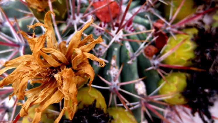 cactus flower in baja seen on westward voyages in the sea of cortez small ship cruise