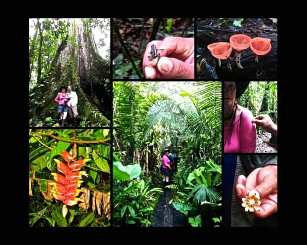 Amazon travelers in front of a large jungle rooted tree, small frog, jungle plants, travelers hiking on a trail in the jungle of the Amazon.