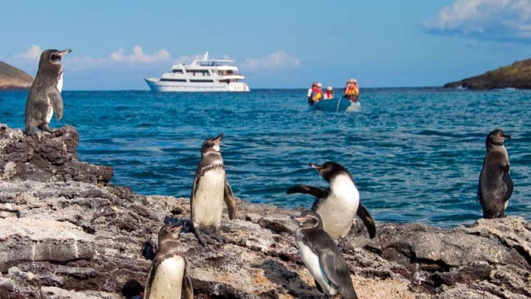 penguins on a rocky outlook over the ocean while a panga takes passengers from sea star journey luxury cruise ship in the background to the Galapagos islands