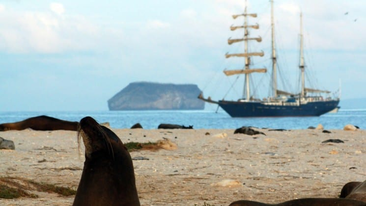 A sea lion lifts its head on a rocky bluff in the foreground, while the S/S Mary Anne, a sailing ship, crosses the ocean between the Galapagos Islands in the distance.